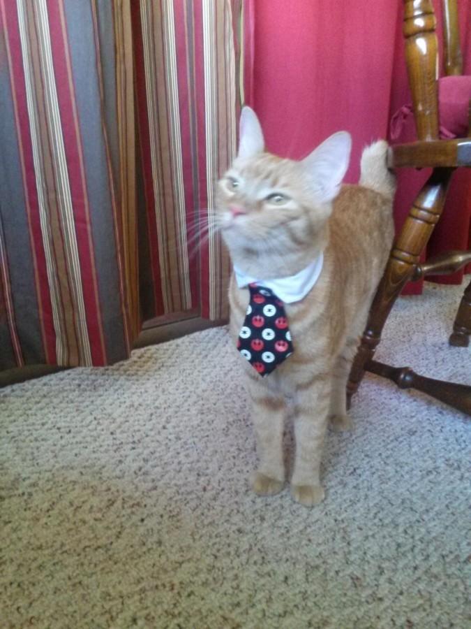 Got my cat a tie today.