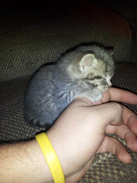 how about a kitten falling asleep on my hand