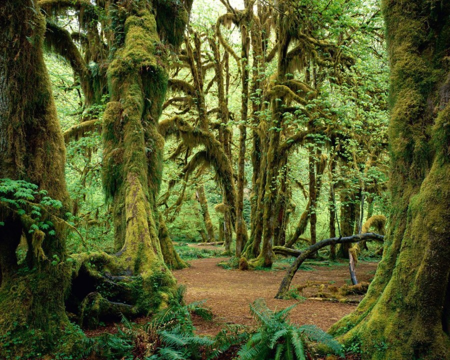 Mossy Wood in Hoh Rainforest, Olympic National Park, Washington [1280×1024]