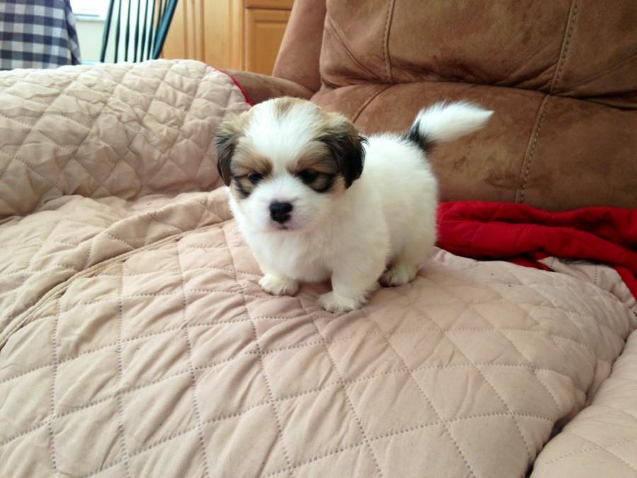 Reddit meet my puppy Winston!
