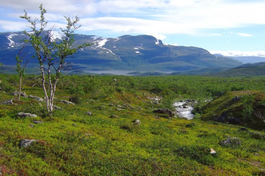 """Summer landscape in """"Kårtejaure"""", Sweden [2048×1365]"""