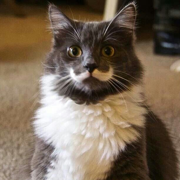 Did someone say movember?