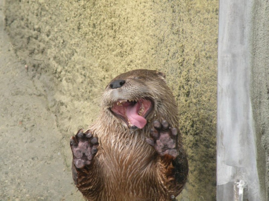 See, Otter!