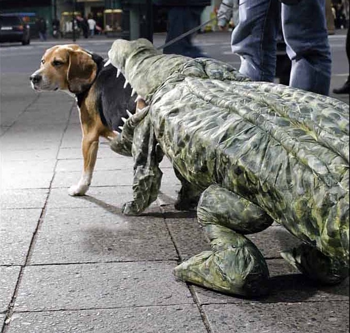 This is a real dog costume
