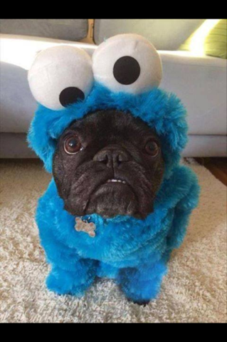 "Friend's 3 year old saw this photo and freaked out: ""What does Cookie Monster have in his mouth?!"""