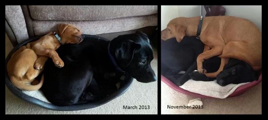 Bentley & Hugo. Somethings never change…