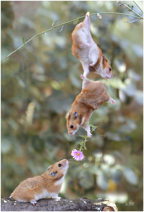 A bro shall always help another bro in pursuit of a lady.