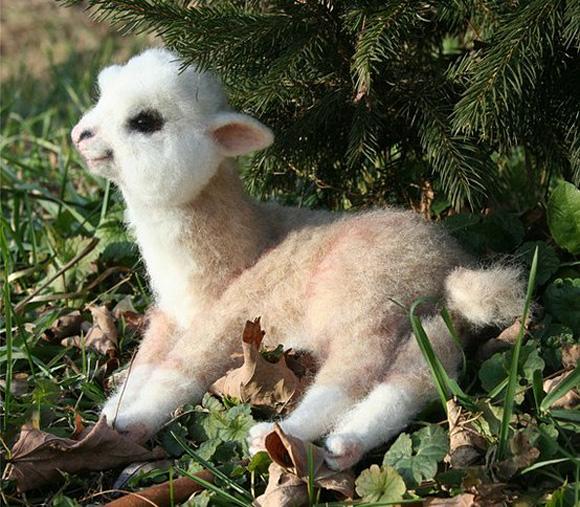 Enjoy this baby alpaca
