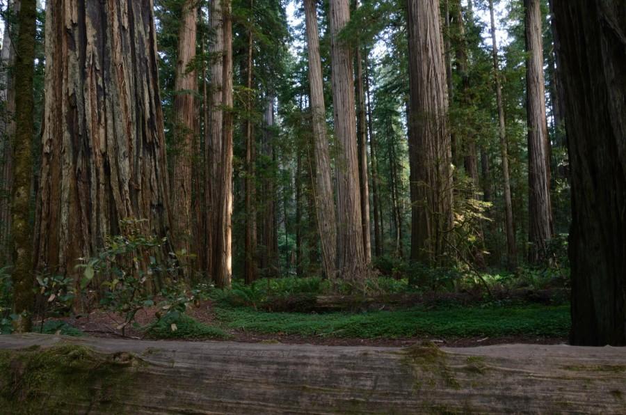 Speaking of Redwoods: Jedediah Smith Redwood State Park, California, [2710×1795] [OC]
