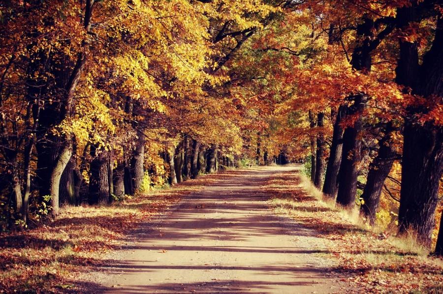 Autumn in Trebon [2243×1491]