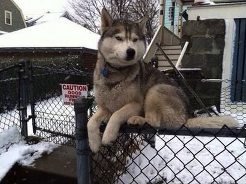 """""""Go for a walk? Meh…I'm kind of on the fence about it."""""""