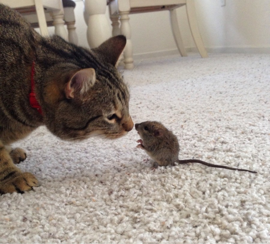 My cats don't like to kill little creatures, so I come home to scenarios like this