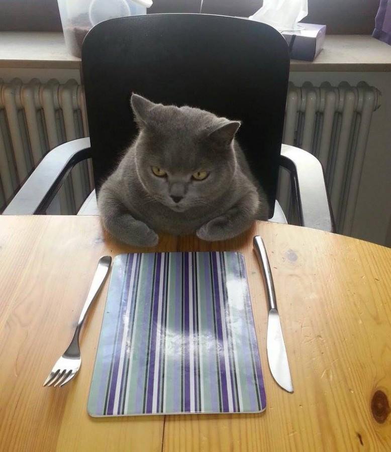 Where's my food?