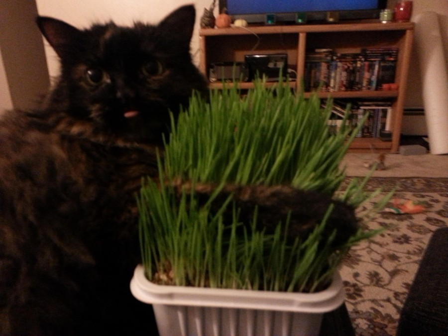 Gertie loves her grass too!