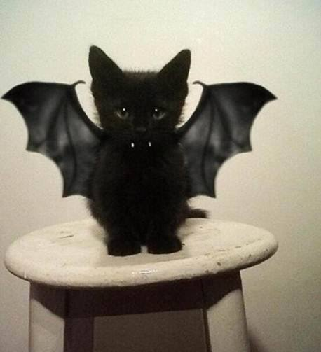Cat-bat! or Dracu-kitty? Found in my Facebook newsfeed.