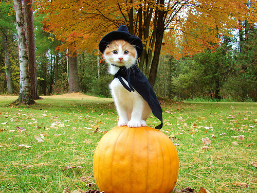Kitty Dressed as a Witch with a Pumpkin
