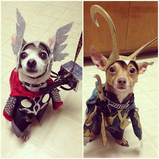 So my friend dressed up her dogs as Thor and Loki for Halloween