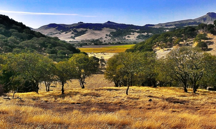 [1280×768] Rockville Park, CA (OC xpost from r/Napa)