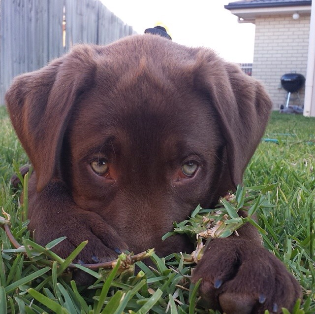 i now understand the saying puppy dog eyes
