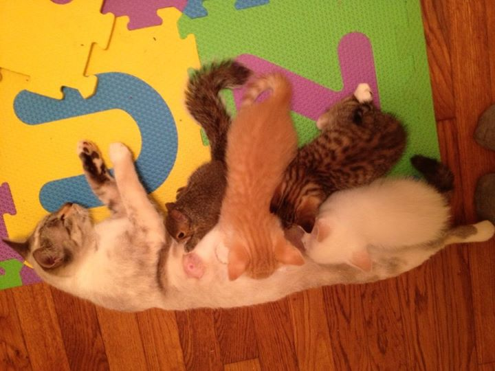 My cat had kittens… in the midst of all the chaos, she now cares for a baby squirrel as her own.