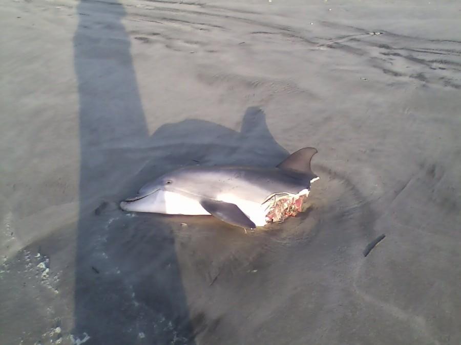 Sharks – 1 Dolphins – 0