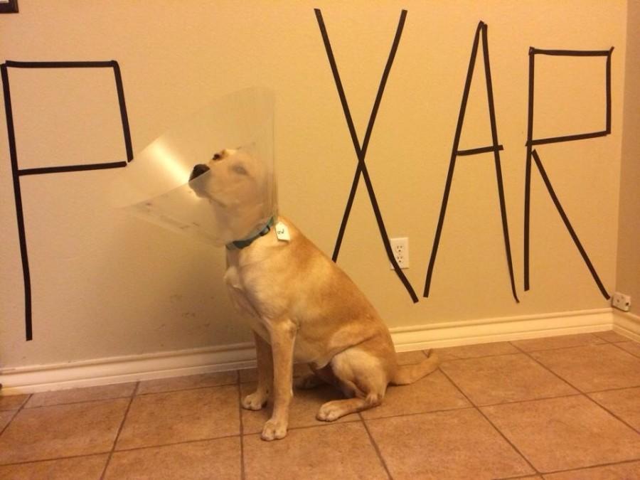So my friends dog got spayed…