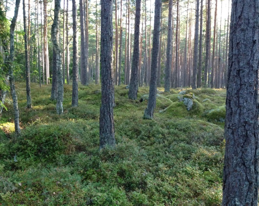 Mossy Forest Bed in Estonia [2450 × 1952]