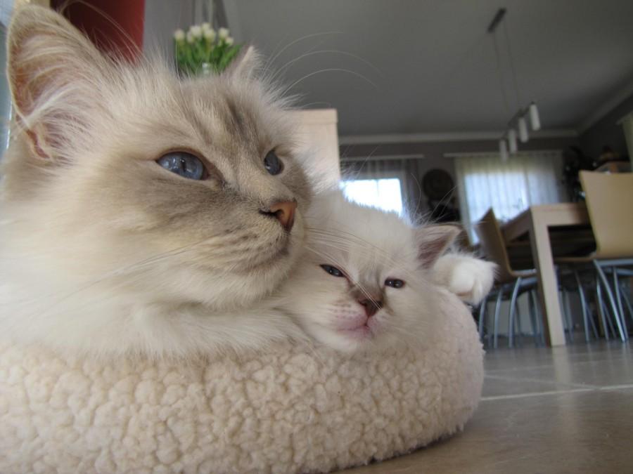 It's cold mom…