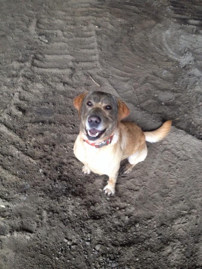 No dad, I wasn't digging..