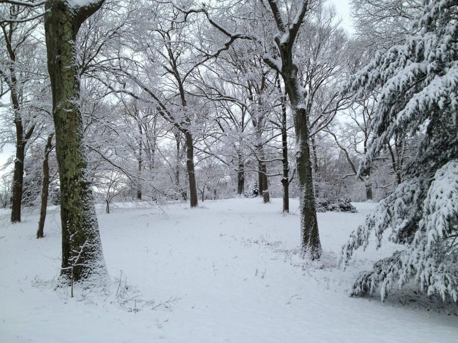 Arnold Arboretum in Winter, Jamaica Plain, MA [2448X1836]