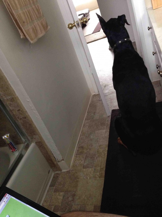 Took my parent's Doberman home after Thanksgiving. I now have security while pooping.