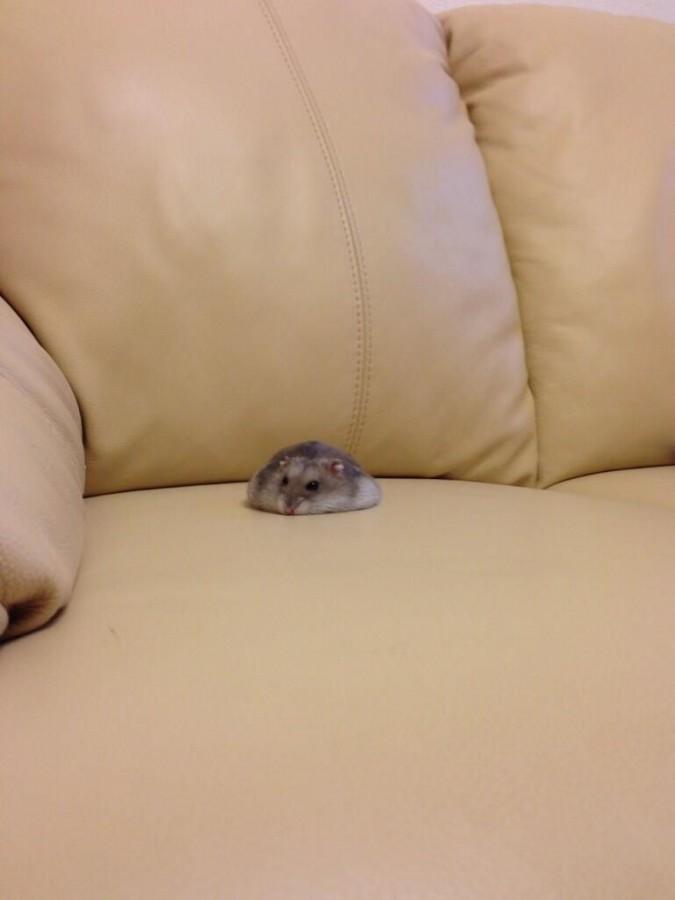 Melted hamster