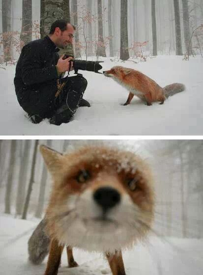 Two perspectives on a fox