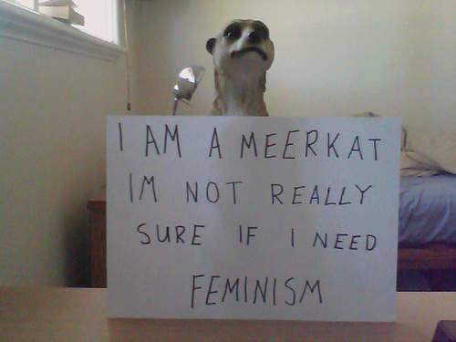 Meerkat not sure