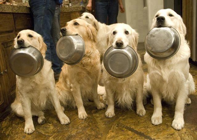 Food time?