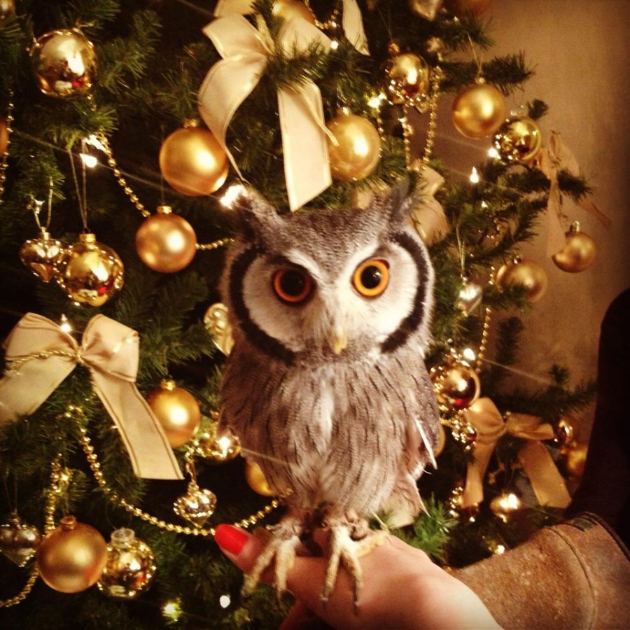 Reddit, meet Winston the Christmas Owl!