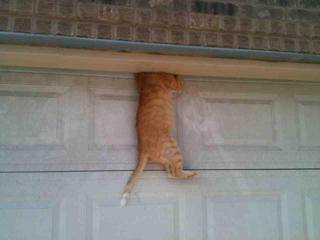 Mouse Proof Dog Door : My cat fell asleep on top of the garage door then this
