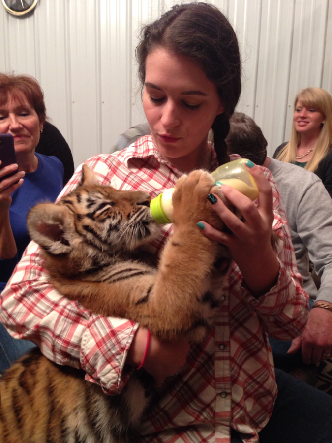 So today, for my birthday, I fed a baby tiger.