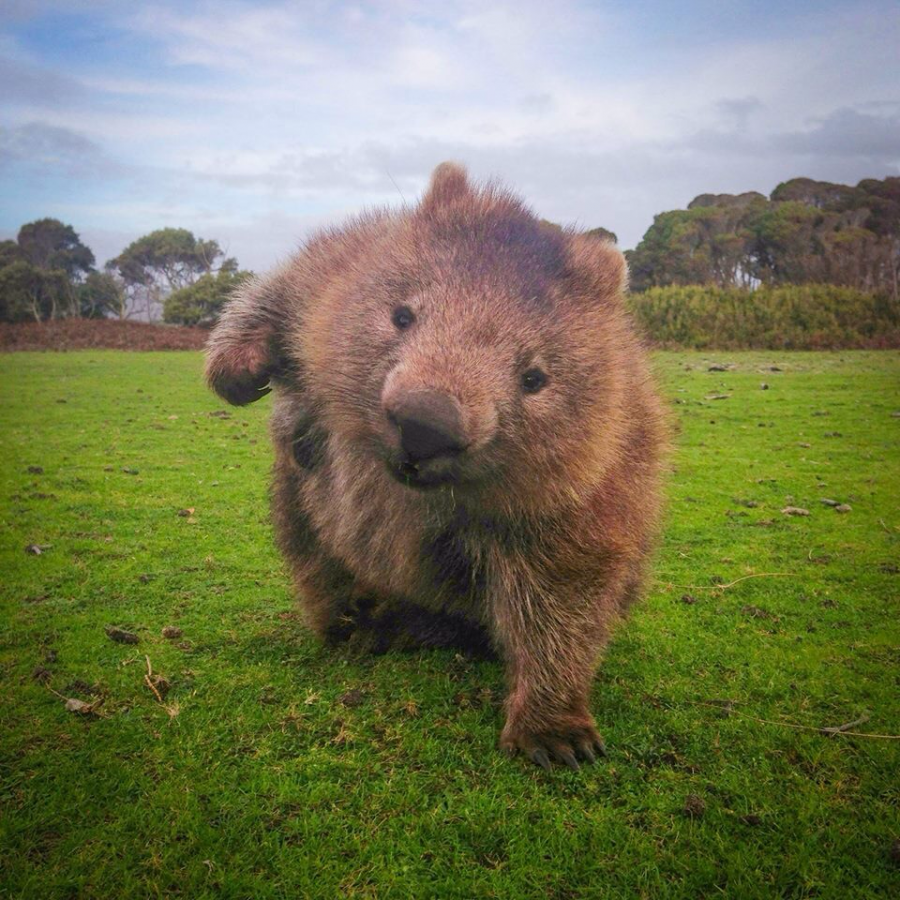 Reddit needs more wombats (FB feed)