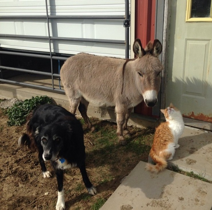 The unusual trio of buddies on my friends farm.