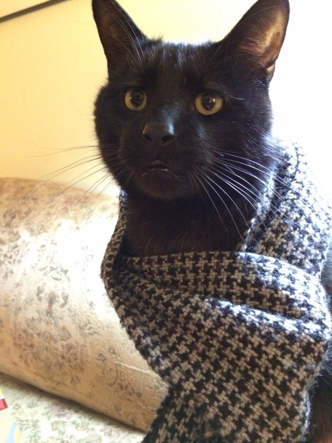 I put my scarf on my cat and he just sat there with this expression