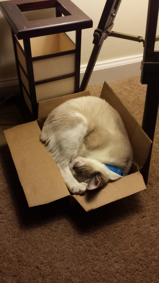 It's my cakeday, so I guess that means I post a picture of my cat sleeping comfortably in a box.