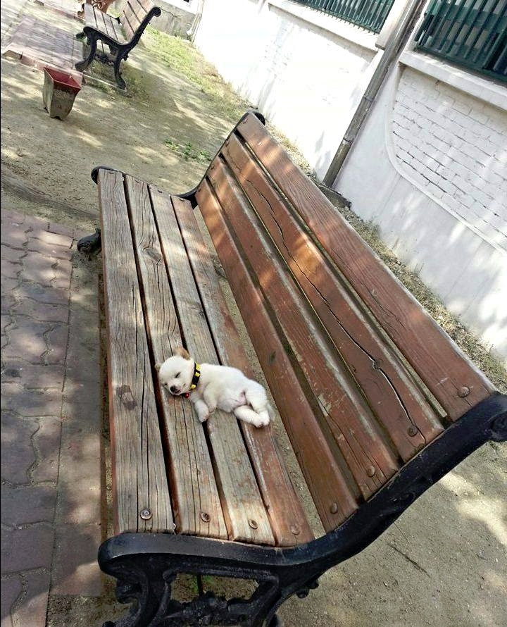 I'll just nap here