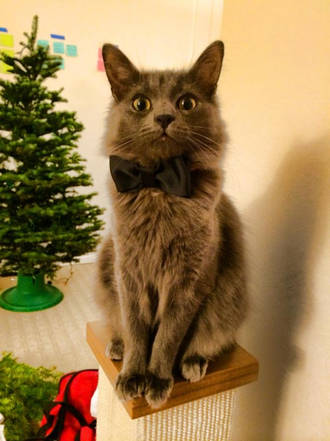 After picking up a tree, I decided to get my buddy a bow tie for his first Christmas.