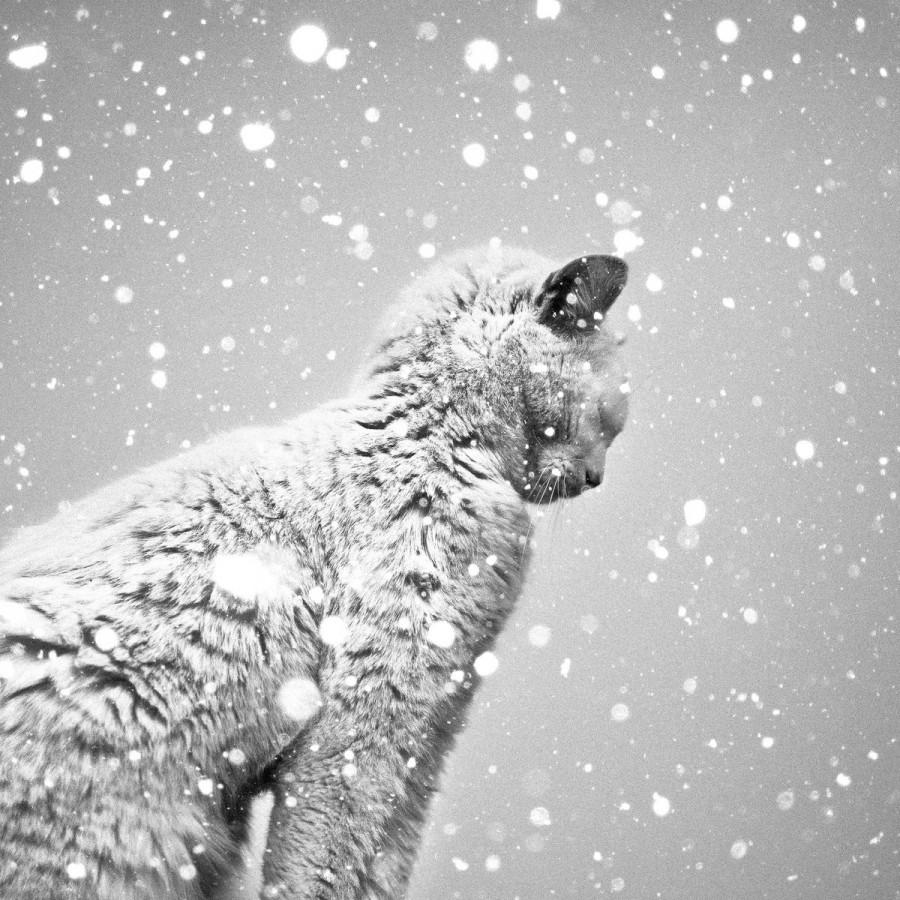 Cat in snow :)