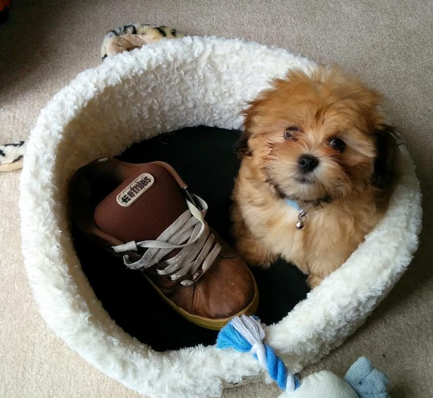 Shoe thief located