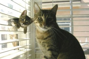 I see your kitten who looks almost exactly like her mother and give you this bit of aww.