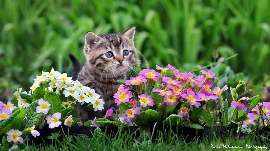 Little florist