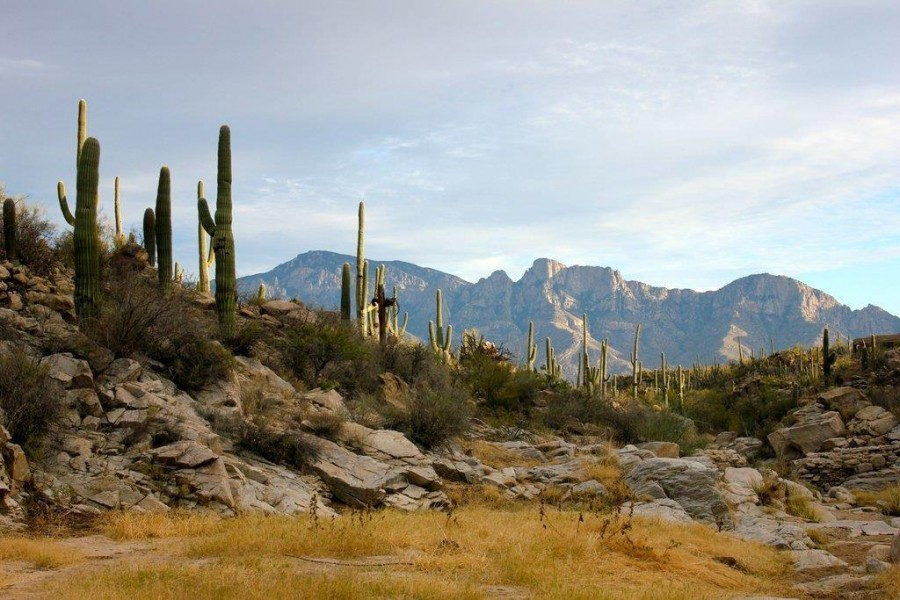 View of the Santa Catalina Mountain Range from Honeybee Canyon [1,024×683] [OC]