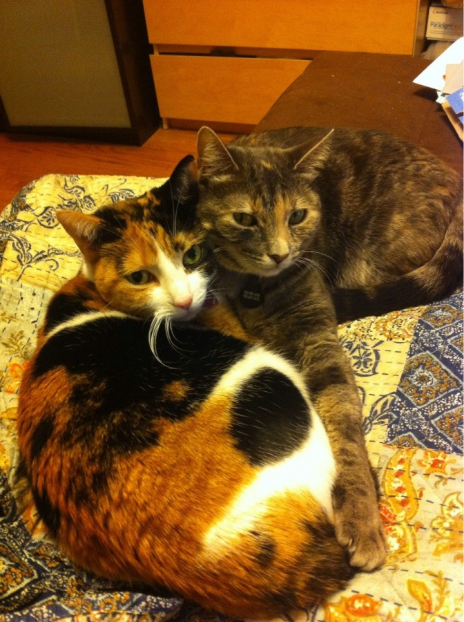 They were apart for three days, and are now making up for lost time